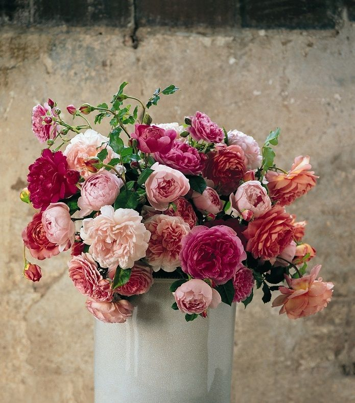 Assorted PBR Bush Rose #blushflowers #bushy  #fullsun #floral