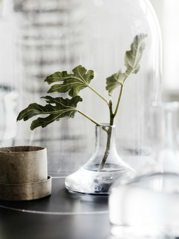 Tuesday tips - Green plants  Lotta Agaton