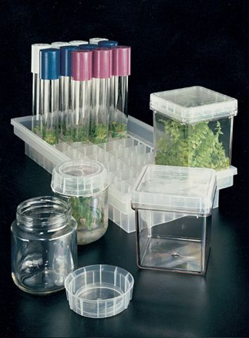 Magenta ® Plant Culture 7-Way Tray -Carries vessels or culture tubes through continuous plant tissue culture operations including washing, filling, autoclaving, transporting and incubating without extra handling   Shelving module, resting on incubation rack channels instead of shelves Ventilates and eliminates hot spots between shelves, allows for more closely spaced shelves on rack   Allows more even lighting. Autoclavable and reusable Capacity: 8 Magenta GA-7/ GA-7-3 or 36 25mm culture…