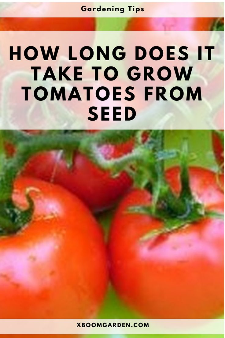 HOW LONG DOES IT TAKE TO GROW TOMATOES FROM SEED in 2020 ...