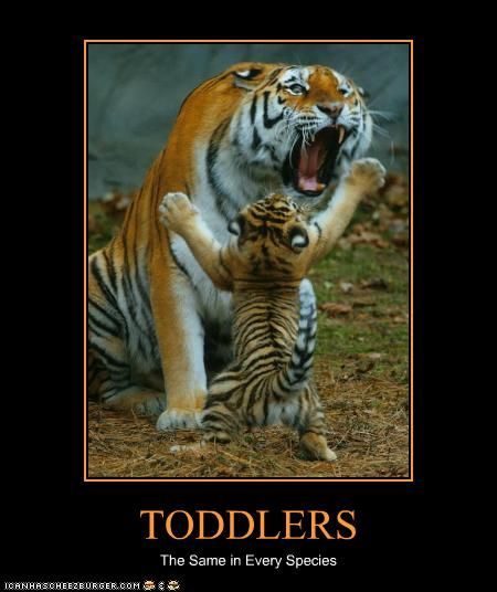 toddlers: Animals, Big Cats, Calm Down, Bigcats, Funny, Tigers, Baby, Toddler, Mom