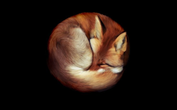 fox sleeping - Поиск в Google