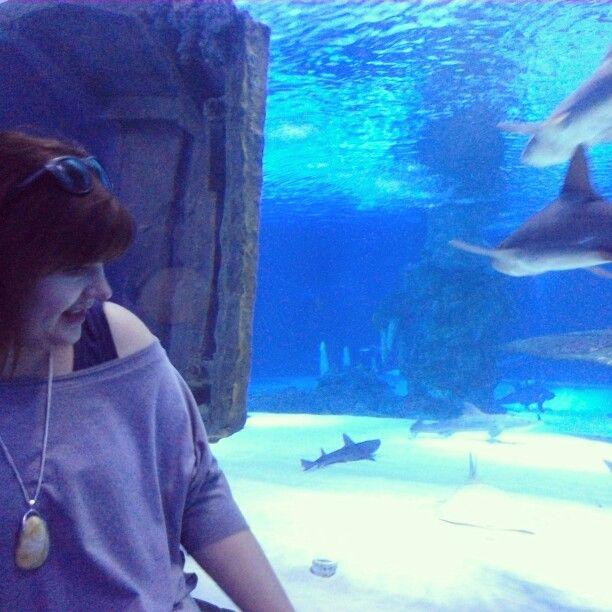 Aquarium Antalya, #aquarium #shark #antalya #turkey