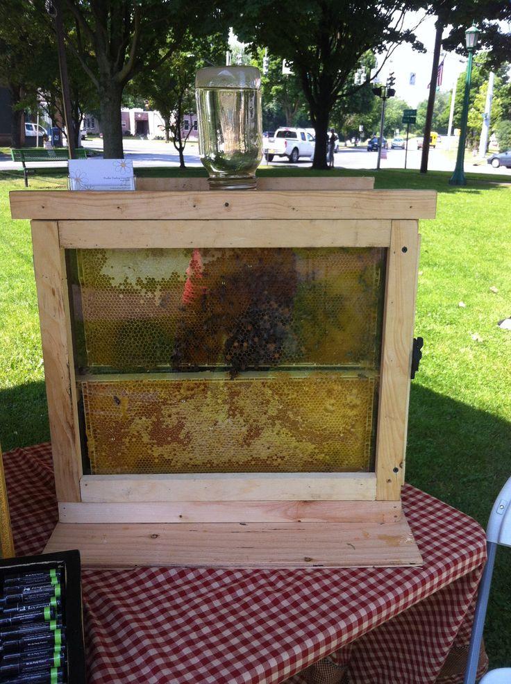 Honey Bee Observation Hive. $45.00, via Etsy.