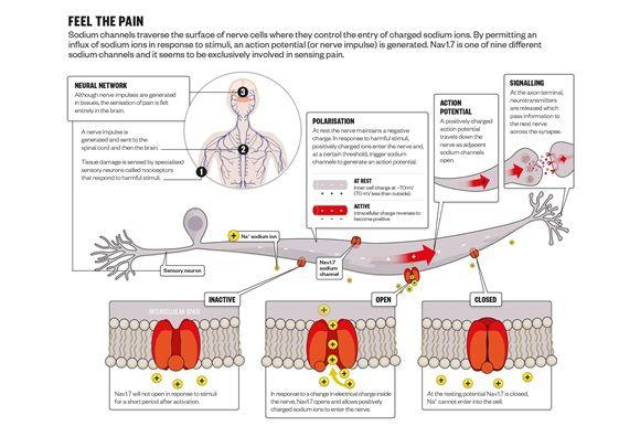 Pain sodium channel figure
