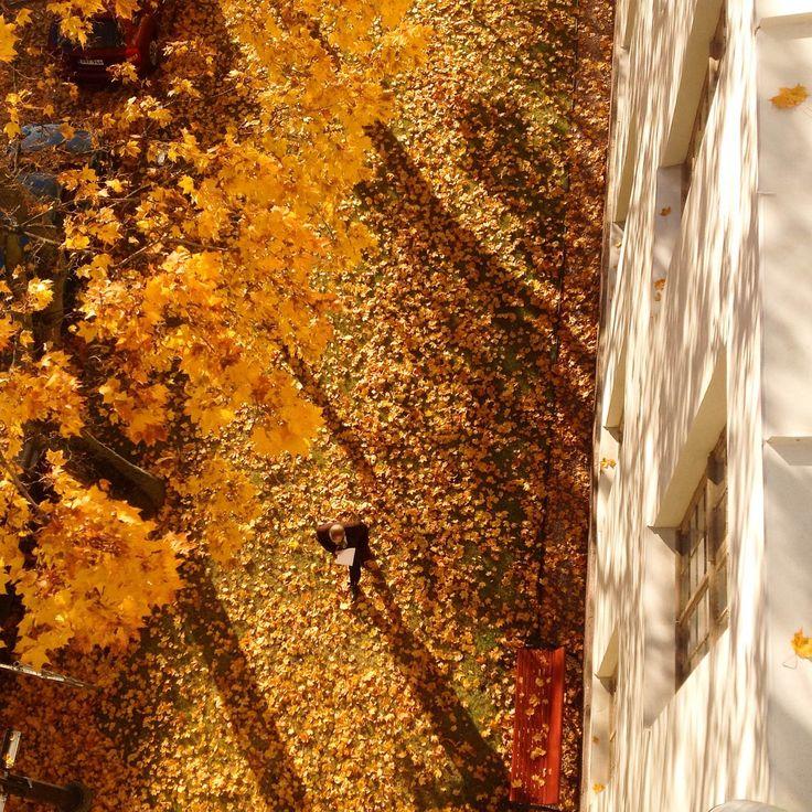 HUS Meilahti. #autumn #mood #sun #colors #light #shadows #yellow #oak #leafs #man #HUS #Meilahti #Helsinki #Finland  janholmberg.weebly.com