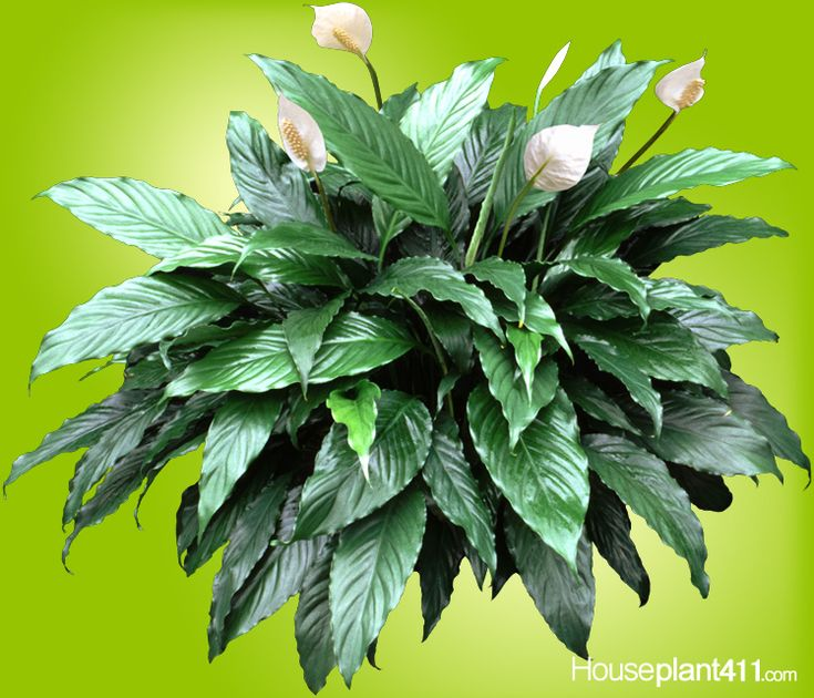 45 best plants that clean the air images on pinterest for Plants that need little care
