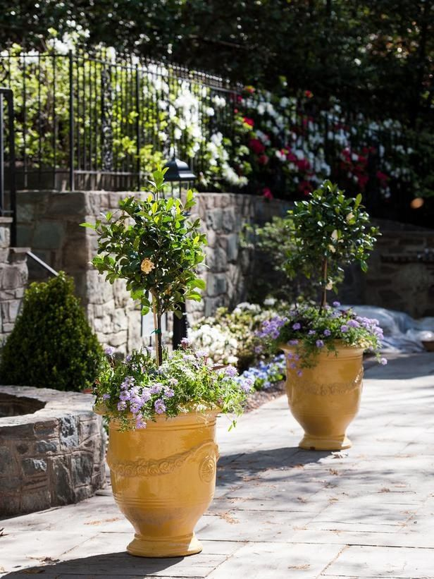 1241 best images about borders pots container gardens on pinterest gardens topiaries - Mediterranean garden plants colors and scents ...