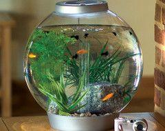 Mini BiOrb 4-gallon Aquarium traditional pet accessories