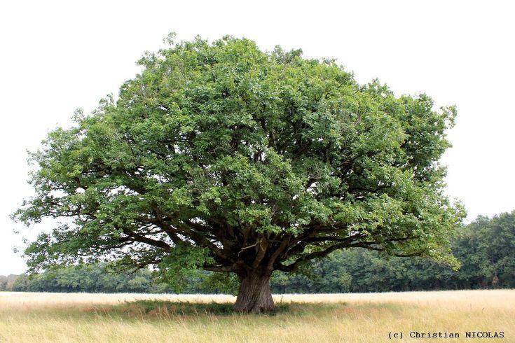 Tout savoir sur la Divinité et voyance des arbres. | Les Blogs des avocats