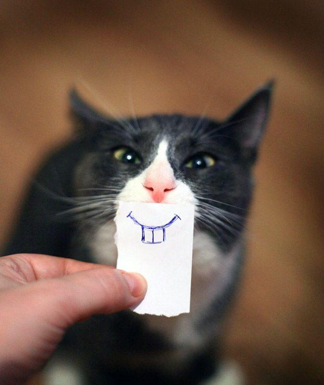 """Einfach süß! 18 Katzen, die von ihren Besitzern """"Comic""""-Münder und Augen gezeichnet bekommen haben!"""