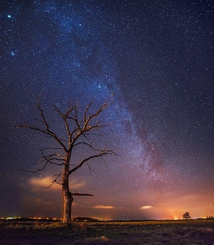 путь к забытому дереву.... samyang 14mm , f2.8 ,  2500 iso, 35 sek X 3 горизонтальных кадра Автор: Oleg Kuchorenko
