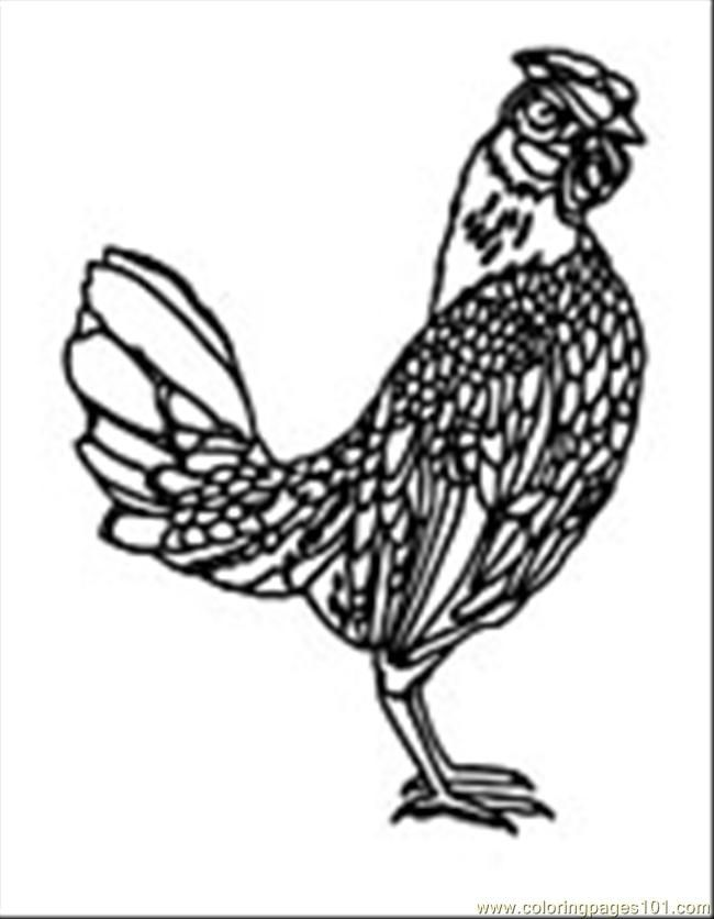 Line Drawing Chicken : Best images about coloring pages line drawings