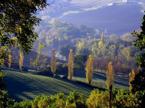 Pictures Tenuta Gorgiano | Poplars autumn