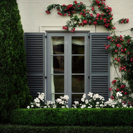 Boxwood hedge with roses
