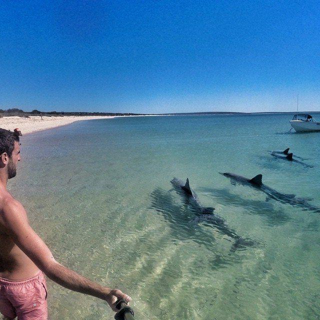 """The """"tame"""" wild dolphins at Monkey Mia, Western Australia. **"""