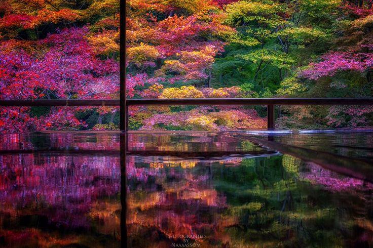 """""""「色彩を写す」 先週訪れた瑠璃光院 書院二階より。 まだピークではありませんでしたが、色とりどりの紅葉を楽しむことができました。 #瑠璃光院 #京都 #紅葉"""""""