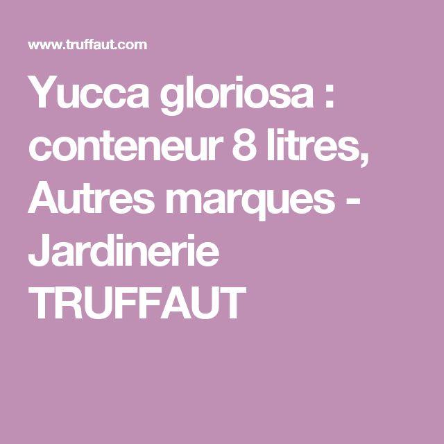 Yucca gloriosa : conteneur 8 litres, Autres marques - Jardinerie TRUFFAUT
