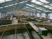 Marine shrimp farming - Wikipedia, the free encyclopedia
