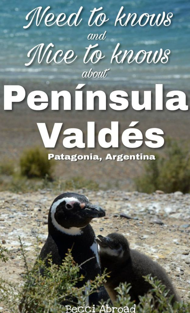 All you need to know before visiting Argentina's wildlife paradise at Peninsula Valdés - Becci Abroad
