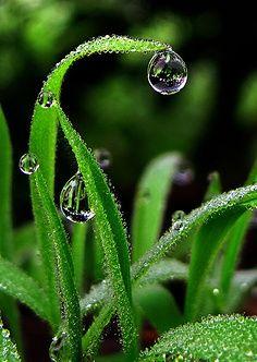 #drops #gotas de agua                                                       …