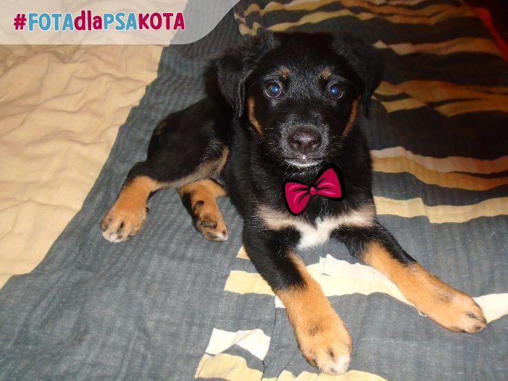Hej! To zdjęcie z konkursu #fotadlapsakota mi się podoba! Jeżeli możesz, proszę oddaj na nie głos, okaż wsparcie dla zwierzaków lub sam weź udział w konkursie… Być może i Ty nagrodę będziesz miau… ;-)