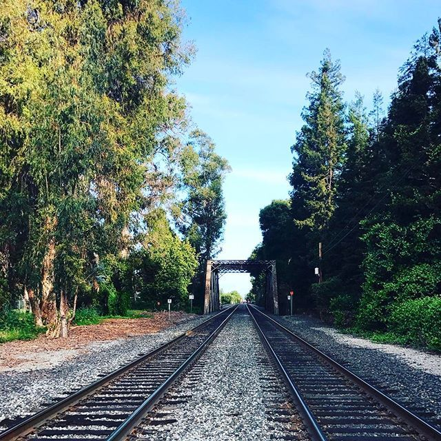 El Palo Alto -- The Tall Tree (right side of the bridge) • #stanford #paloalto #bayarea #siliconvalley #california #history #nature #landscape #caltrain • More at: https://en.m.wikipedia.org/wiki/El_Palo_Alto • #montereylocals #pacificgrovelocals- posted by hsyndrsn https://www.instagram.com/drsnhsyn. See more of Pacific Grove, CA at http://pacificgrovelocals.com