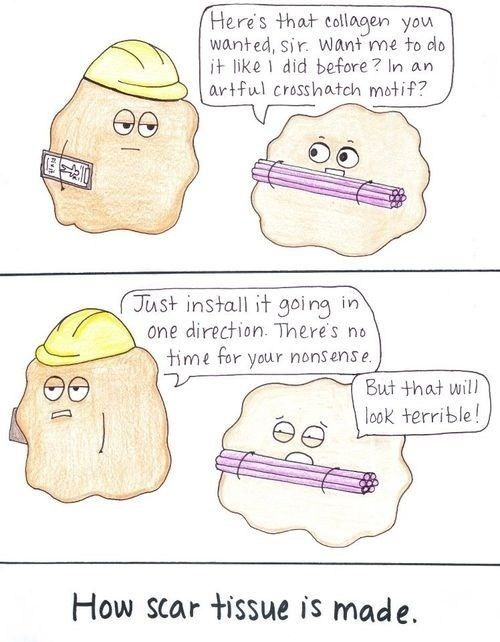 Anatomy and physiology humor.