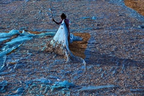 Harvesting anchovies on Ngapali Beach, Myanmar