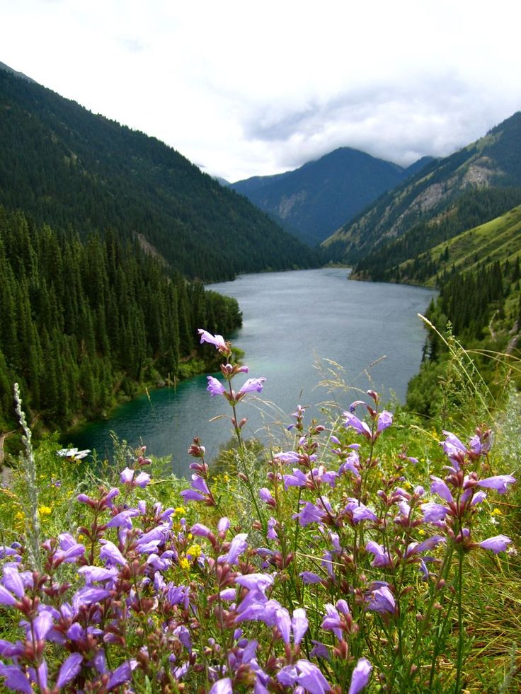 nature of kazakhstan essay Kazakhstan is a bilingual country: the kazakh language, spoken by 644% of the population, has the status of the state language, while russian, which is spoken by almost all kazakhstanis, is declared the official language, and is used routinely in business.