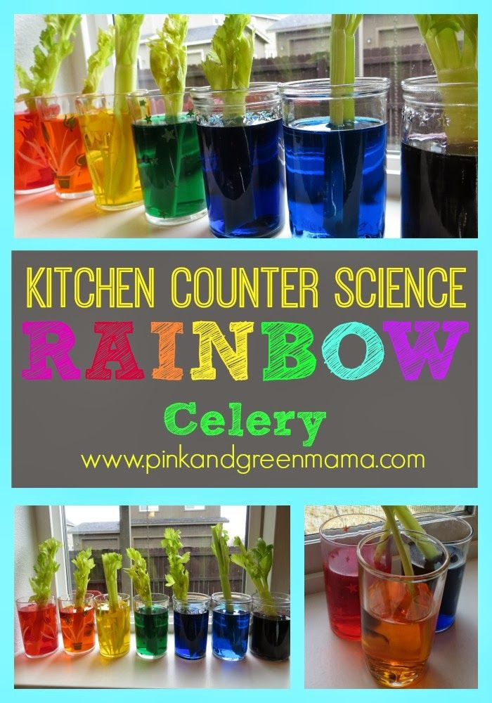 Rainbow celery science activity for kids