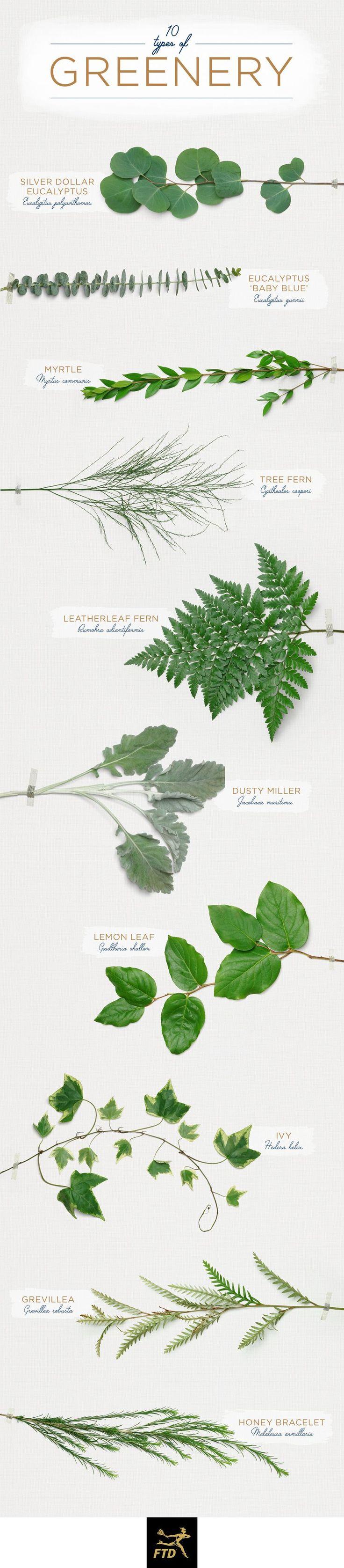 2018 Wedding Trends Greenery. Green wedding Flowers Guide on How to DIY Wedding Flowers. #greenery #weddingtrends #diywedding
