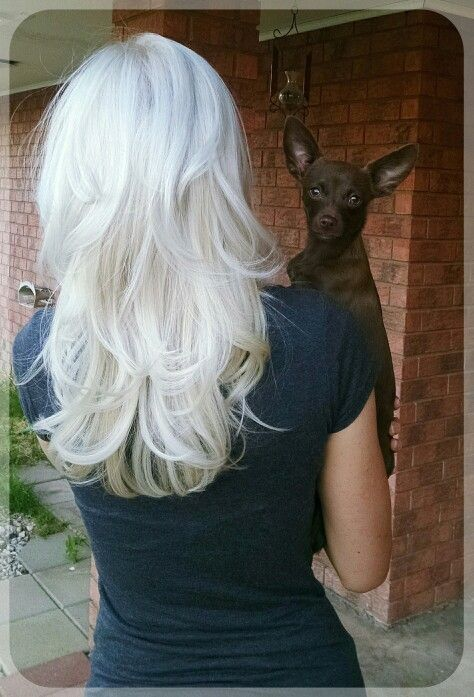 Ice blonde, layered hair. Cap & highlight then use Wella T18 toner... add chihuahua.