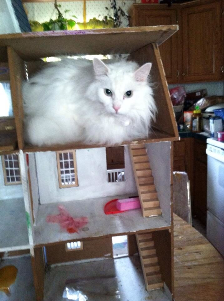 Doll house nope cat house lol 159