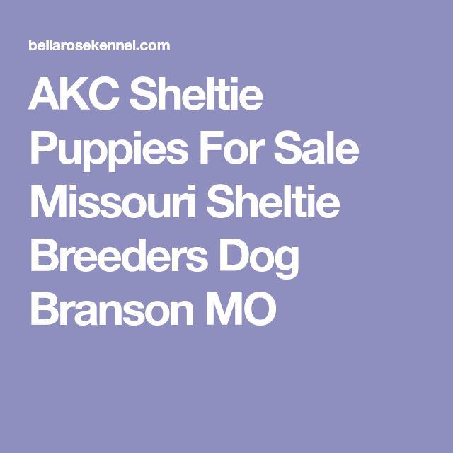 AKC Sheltie Puppies For Sale Missouri Sheltie Breeders Dog Branson MO