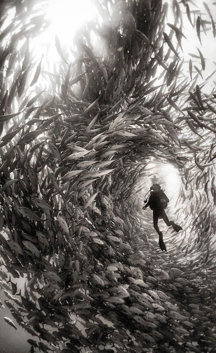 Underwater Realm – as inacreditáveis fotografias subaquáticas de Anuar Patjane