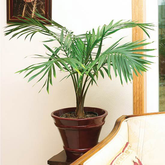 Fantastic foliage houseplants palms spider mites and for Plants low light indoor