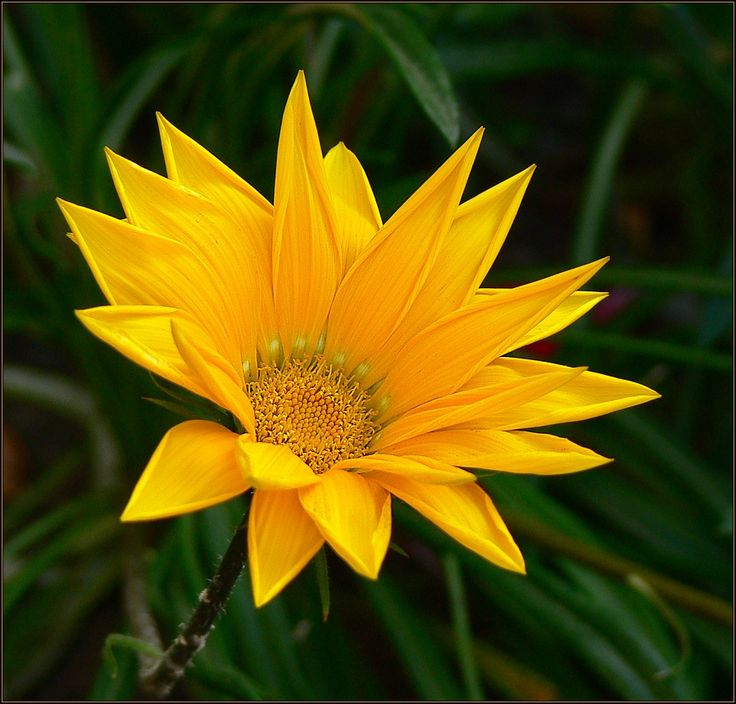 Nový  květ  I