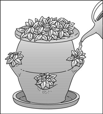 How to plant a strawberry pot for dummies garden ideas for Indoor gardening for dummies