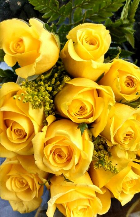 Rosas color amarillo