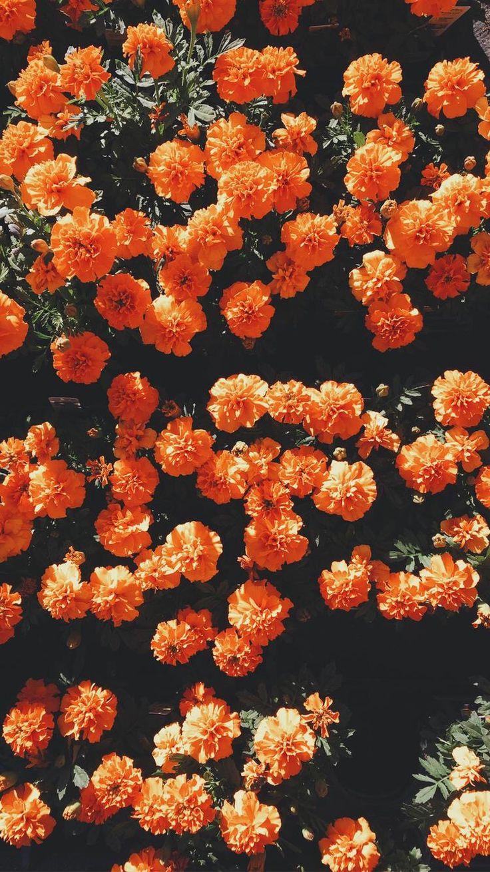 Fall Vintage Wallpaper 𝐜𝐫𝐮𝐧𝐜𝐡𝐜𝐫𝐮𝐧𝐜𝐡𝐢𝐞𝐬┆☼ Orange In 2019 Blumen Hintergr 252 Nde