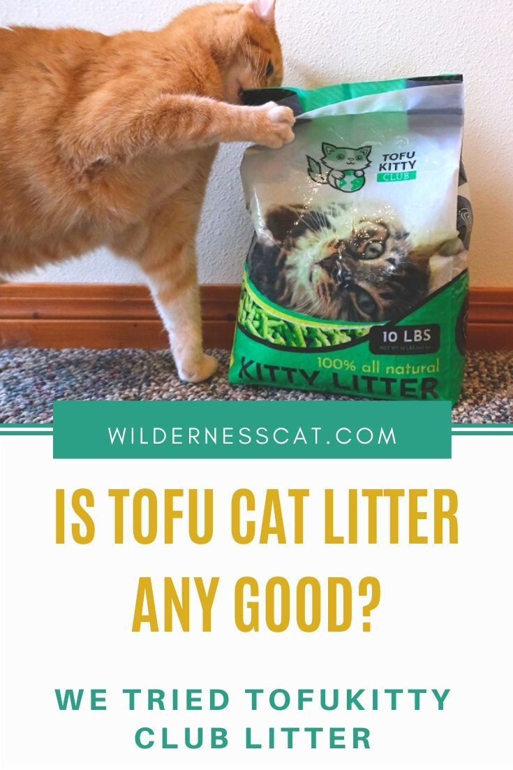 TofuKitty Cat Litter Review We Tried Tofu Cat Litter! in
