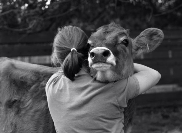 """I remember """"adopting"""" a white cow at my Grandpa's farm. And then she got slaughtered. I was pretty upset."""