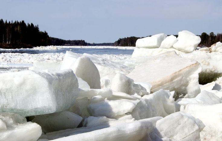 Ice break-up in the Tornio River in Pello in Lapland in spring