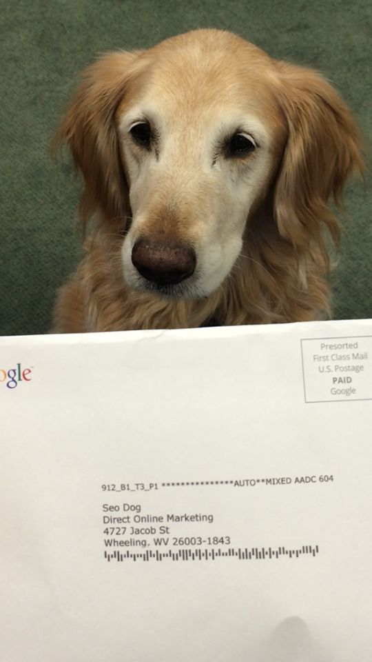 What other mascot/pet gets mail directly from Google? SEO Dog does!!