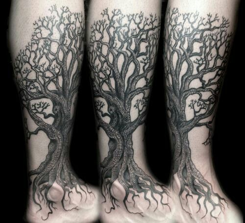 Tree roots & branches