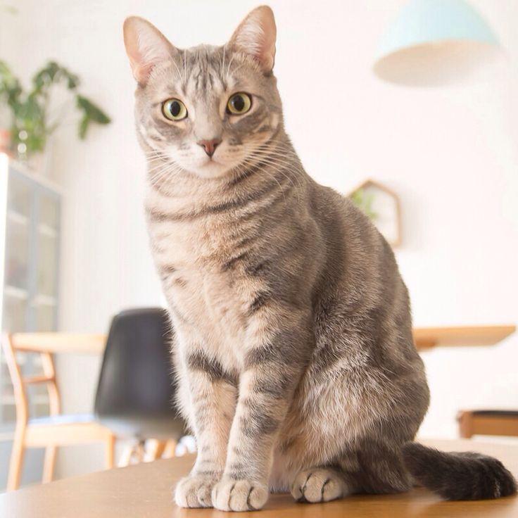 Arigato the cat :)
