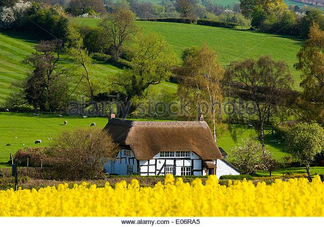 rapeseed cottage | Half Timbered Thatched Cottage Stock Photos & Half Timbered Thatched ...