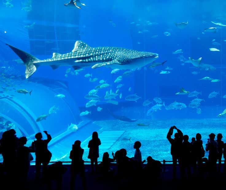 New England Zoos & Aquariums Perfect For Day Trips - Your AAA