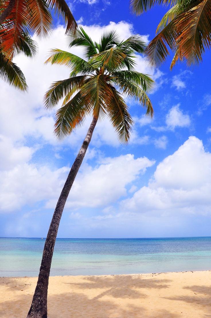 Les Saintes, Guadeloupe, French West Indies, paraidise, Marie Galante, Västindien, Karibien, Strand sol, paradis, beach, sun, sea,